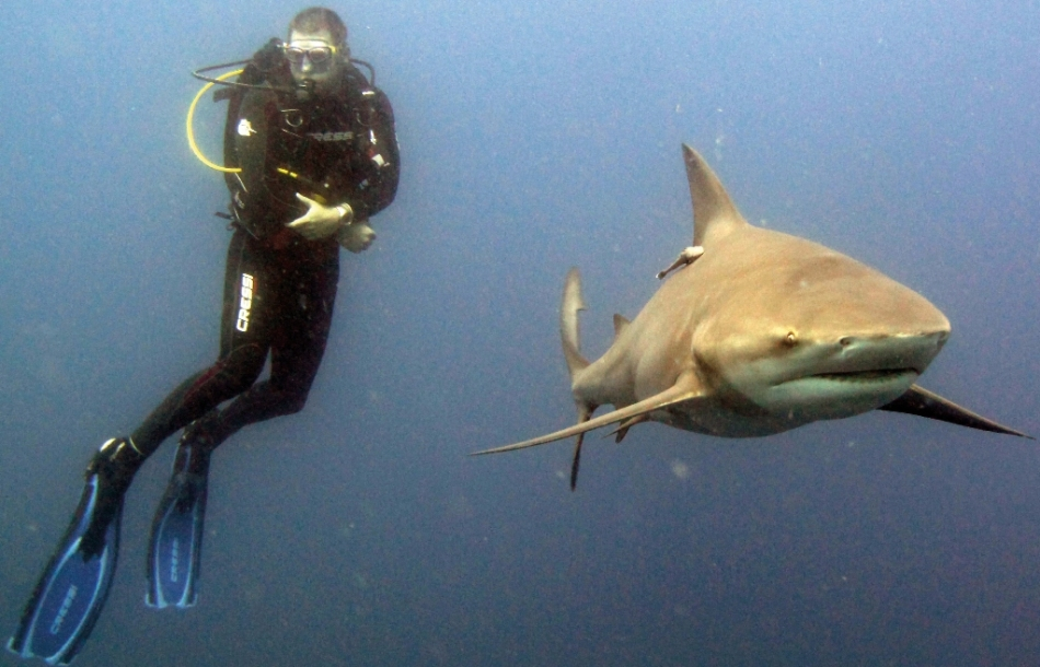 SCUBA Diving with Sharks on Nomad's South African Dive Tour