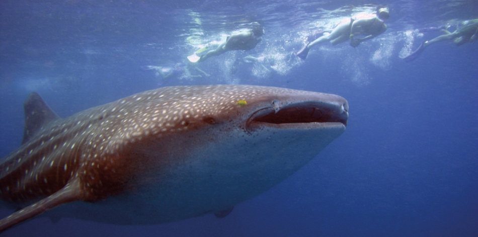 The gentle giants of the sea, Tofo