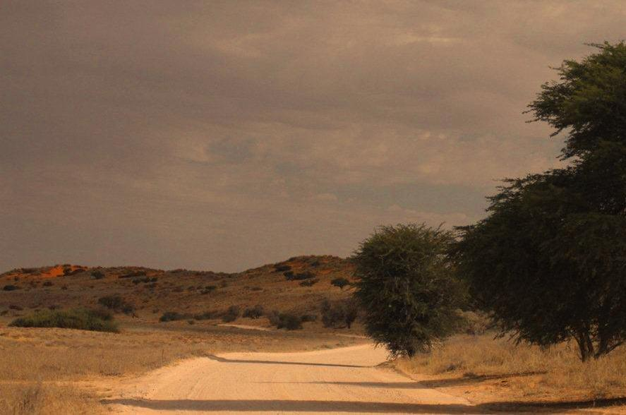 Farewell long dusty roads of the Kgalagadi National Park!