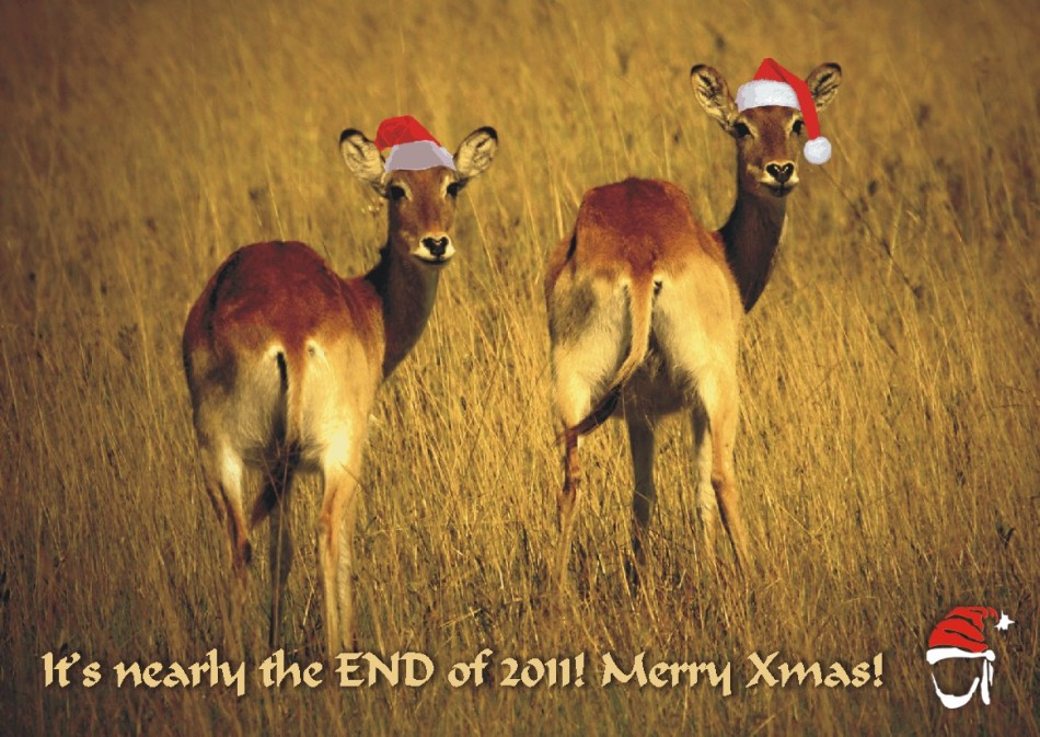 Cute Christmas Cards, buy now to support the Helderberg Animal Welfare Society