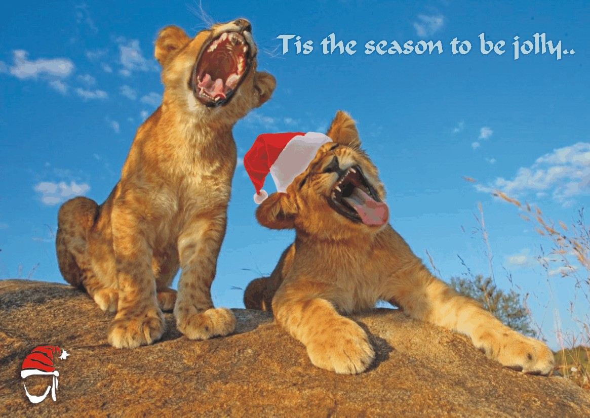 Wildlife Christmas Cards.Animal Christmas Card Nomad Africa Adventure Tours